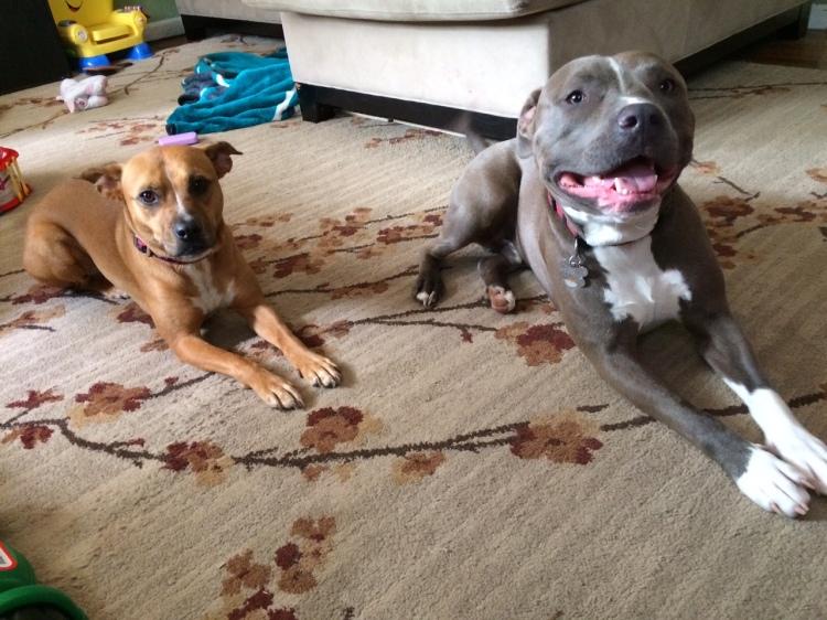 Dobby and Bruin