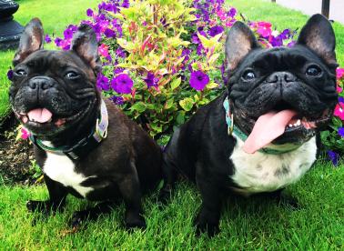 Petunia and Ruben